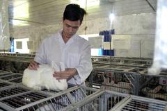 Giảng viên đại học bỏ về quê nuôi thỏ kiếm lãi 3 tỷ/năm