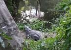 Nữ du khách đau đớn vì cố chụp ảnh 'tự sướng' với cá sấu