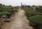 Mãn nhãn dàn cây độc bậc nhất đất Thành Nam