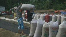 Bỏ quy hoạch về xuất khẩu gạo