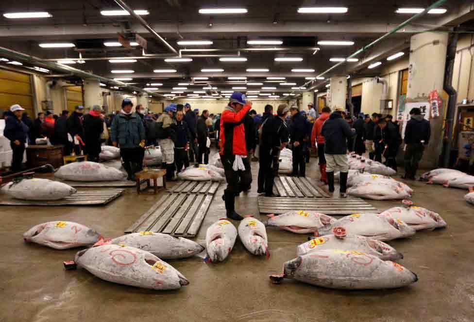 Chùm ảnh phiên đấu giá cá ngừ đầu năm ở Nhật