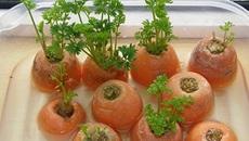 8 loại rau quen thuộc chỉ cần trồng một lần ăn mãi chẳng hết