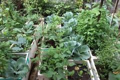 Hoa khôi ĐH Xây dựng khoe vườn rau xanh mát trong vườn nhà ai cũng thích mê