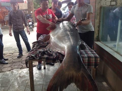 """Chi hơn 100 triệu đưa """"thủy quái"""" từ Campuchia về Hà Nội"""