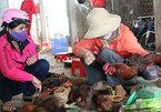 Cấm bán gà vịt sống, cấm giết mổ gia cầm tại chợ?