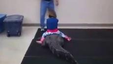 Cho con cưỡi cá sấu, bố mẹ bị chỉ trích