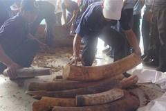 Tàu nước ngoài chở hơn 400 kg ngà voi gửi đến địa chỉ ma