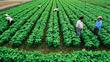 Làm gì để xây thương hiệu cho nông sản Việt?