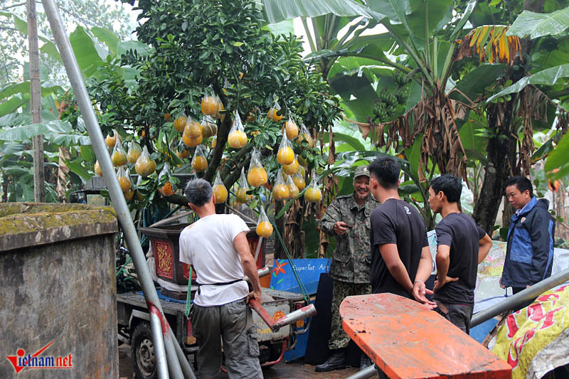 Kỳ lạ cây 9 loại quả cùng chín rộ vào Tết