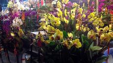 Hoa ly ế 'cho không thèm lấy', địa lan bạc triệu đắt khách