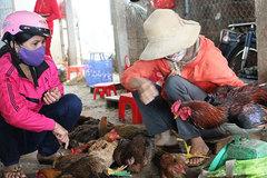 Gà vịt sống, giết mổ tại chợ: Biết bẩn vẫn khó bỏ