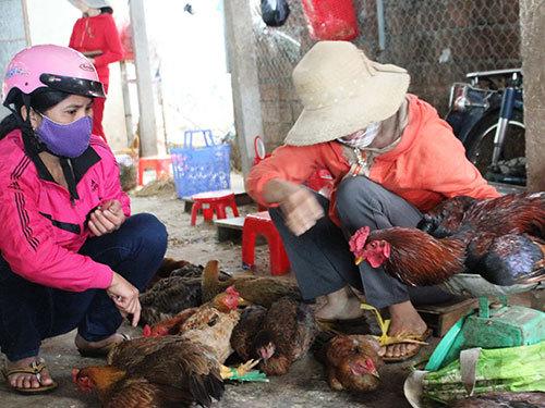 Cấm gà vịt sống, giết mổ tại chợ: Biết bẩn vẫn khó bỏ - ảnh 1