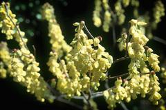 Bí quyết chữa bệnh bằng hoa của Ấn Ðộ