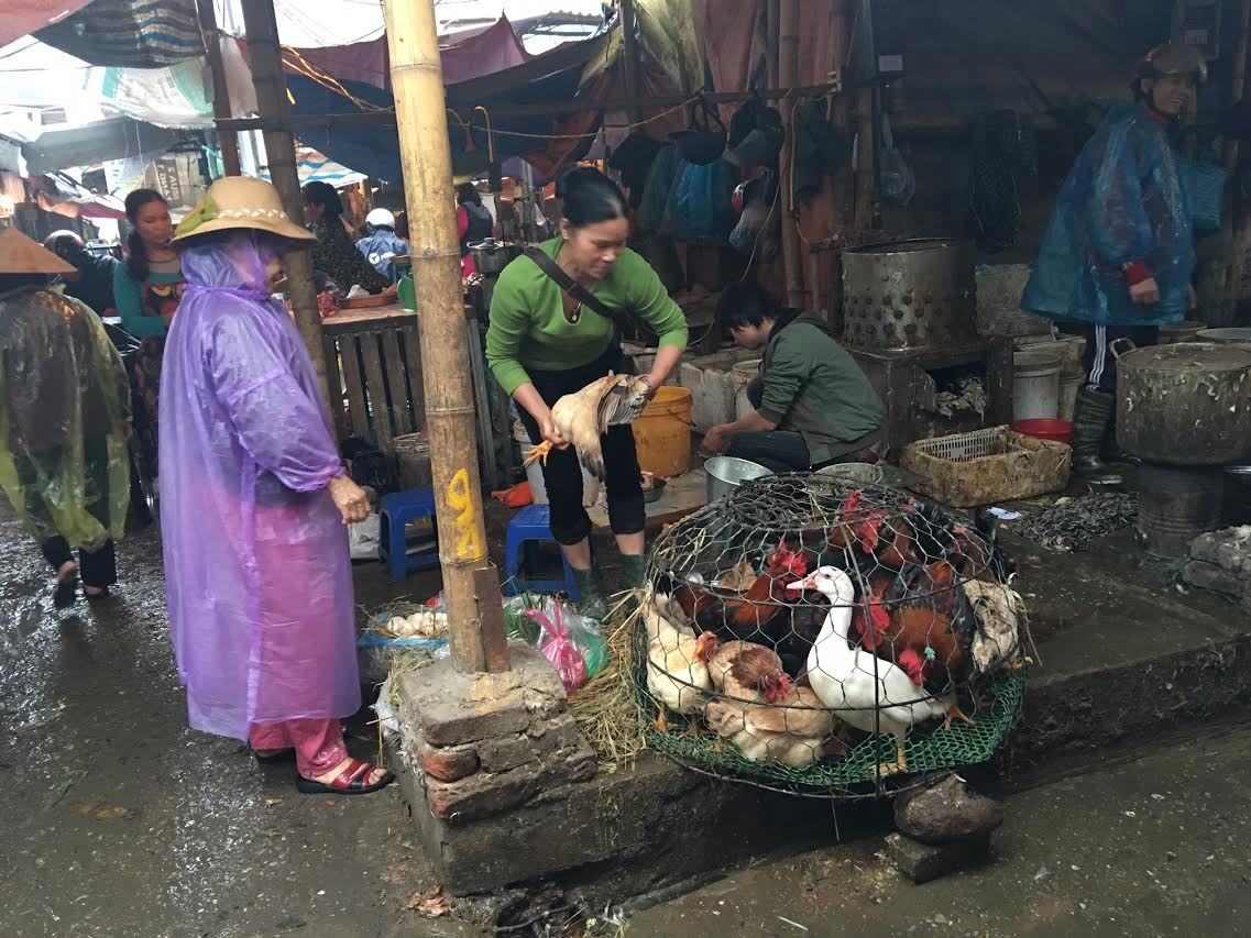 Cấm gà vịt sống, giết mổ tại chợ: Biết bẩn vẫn khó bỏ - ảnh 2