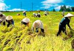 Nông nghiệp Việt Nam: 'Bệ đỡ' kinh tế 30 năm đổi mới