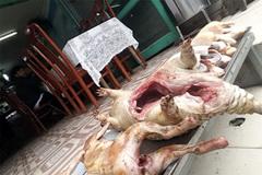 Thịt thú rừng 'khoe' săn ở Vườn quốc gia Tam Đảo có thể là... chuột cống