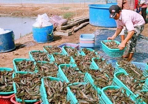 Lén lút bán kháng sinh cấm cho người chăn nuôi