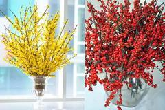 Hoa đào, hoa mai Mỹ bay ngàn km chiều đại gia Việt chơi Tết