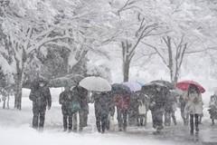 Thí sinh Nhật Bản đi thi đại học trong mưa tuyết