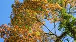 6 vùng lá phong tuyệt đẹp khắp cả nước