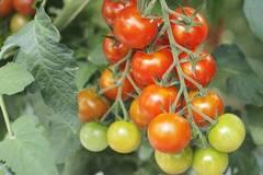 Những loại cây rau nên trồng trong tháng 1