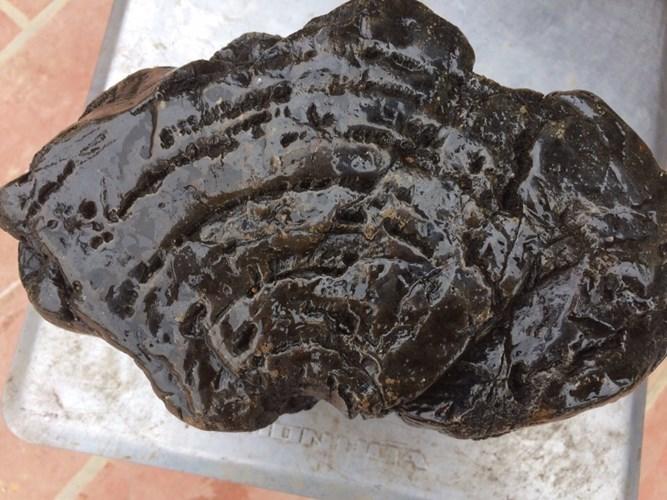 Khối gỗ ngọc am hóa thạch đổi màu, trả trăm triệu chưa bán