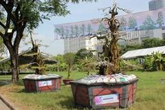 Cặp khế kiểng rao bán giá 12 tỷ ở Sài Gòn