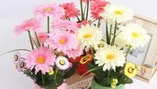 7 loài hoa trưng bày dịp Tết mang may mắn đến cho gia chủ