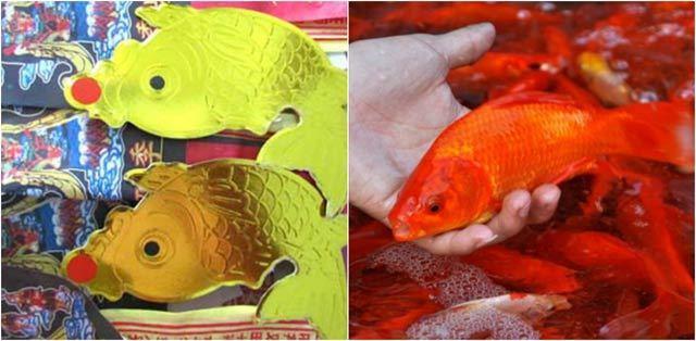 Cách chọn cá chép chuẩn nhất để cúng ông Công, ông Táo