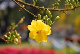 Mùa xuân, xuân về, Xuân đã về, thì thaafgm mùa xuân