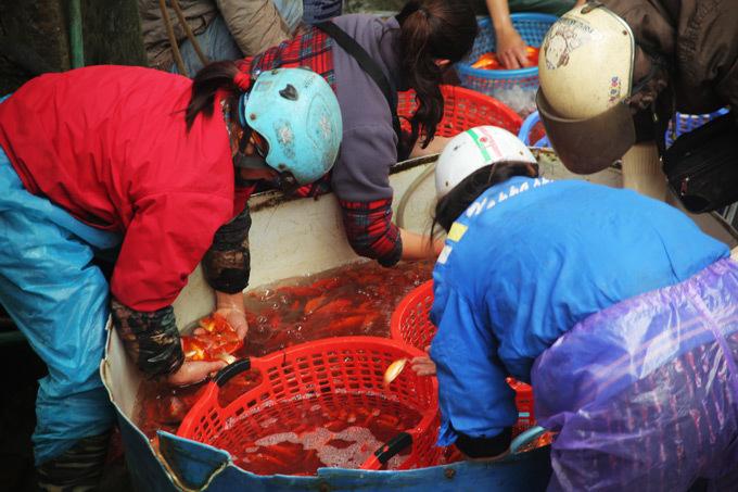 Sắm 'xế đỏ' tiễn Táo quân tại chợ cá lớn nhất Hà Nội