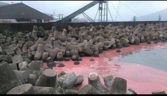 Kiểm tra mẫu nước có váng đỏ tại Vũng Áng