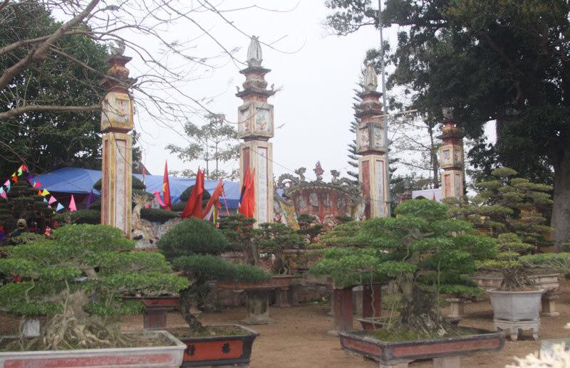 cặp sanh cổ, báu vật, làng cây cảnh Vỵ Khê, siêu cây