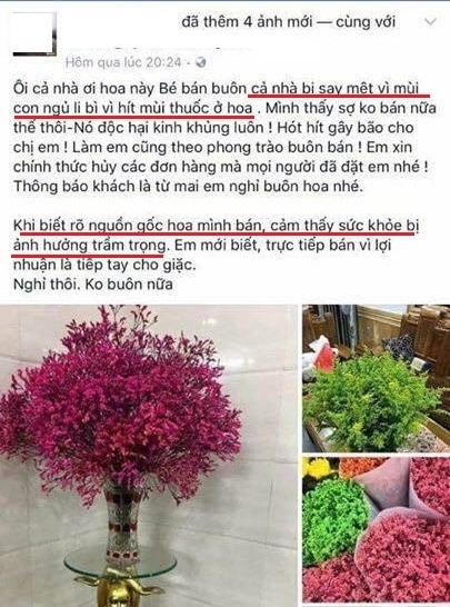 Hoa sao khô tẩm phẩm màu độc hại 'bung lụa' dịp Tết