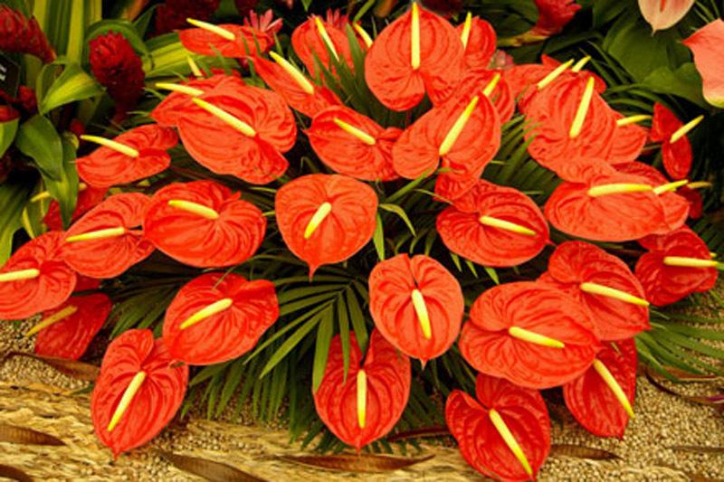 Hoa tết, hoa nào có độc?