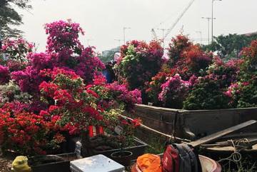 Sài Gòn: Hiu hắt chợ hoa 'trên bến dưới thuyền'