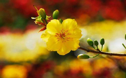 7 loại cây hút may mắn ào ạt vào nhà trong ngày Tết