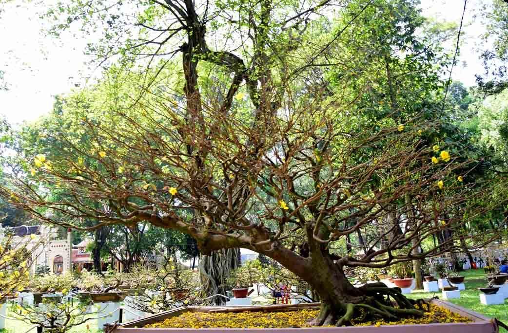 Nhiều loại hoa kiểng độc lạ ở Hội hoa Xuân lớn nhất Sài Gòn