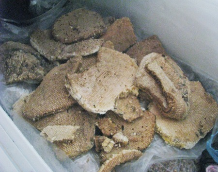 Về Cà Mau nhớ thử mắm ong rừng U Minh Hạ