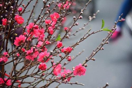 Những lời chúc Tết ý nghĩa cho năm Đinh Dậu