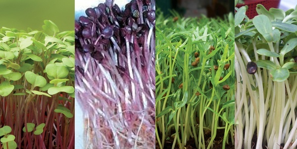 3 loại rau trồng và thu hoạch ngay trong bếp cho những ngày giáp Tết