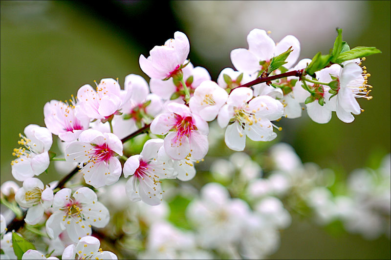 Tết, mùa xuân, mùa xuân của mẹ