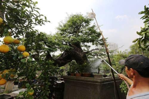 """Nhiều cây """"khủng, độc' bạc tỷ ở Hội hoa xuân Sài Gòn"""