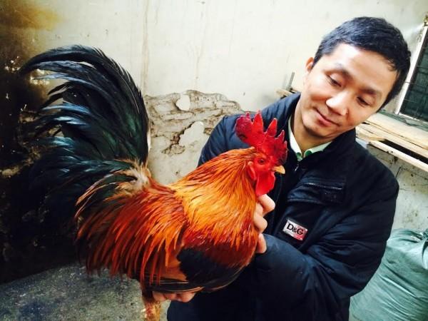 gà đặc sản, nuôi gà đặc sản, bảo tồn gà cổ thuần Việt, bỏ giám đốc về nuôi gà, nuôi gà thu tiền tỷ,