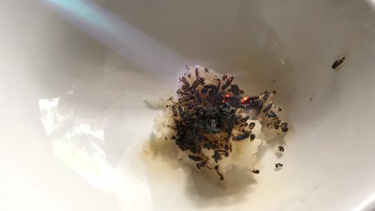 Gạo lạ đốt cháy như nhựa xuất hiện ở Sài Gòn