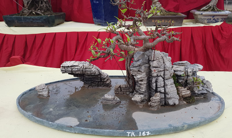 cây cảnh, cây cảnh tiền tỷ, làng Triều Khúc, Hà Nội
