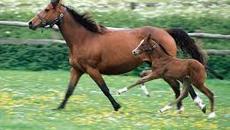 Ruột ngựa có thẳng không?