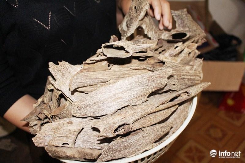 Chiêm ngưỡng dó trầm giá trăm triệu ở miền núi Hà Tĩnh