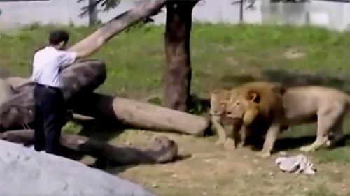 [VietnamNet.vn] Định 'thôi miên' sư tử, người đàn ông say suýt bỏ mạng