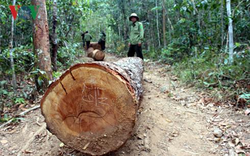 Lâm tặc cướp gỗ từ lực lượng chức năng